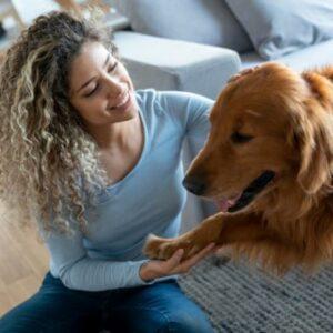 CBD Oil for Dogs, CBD Oil for Medium Sized Animals, CBD Tinctures for Medium Sized Dogs