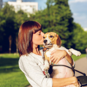 CBD Treatment for Dogs