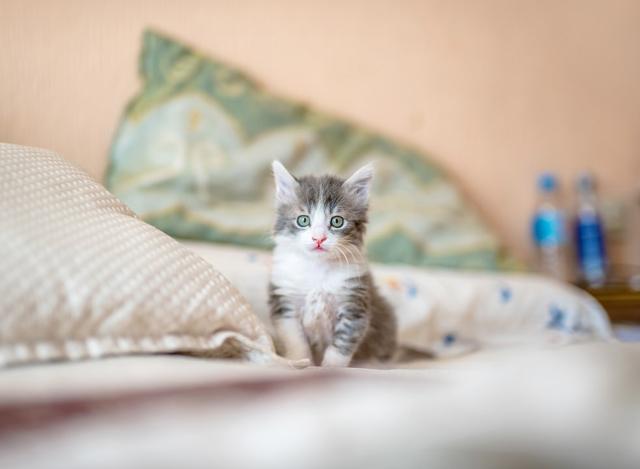 CBD Treatment for Cats