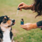 Giving CBD Oil to Dogs with Cancer