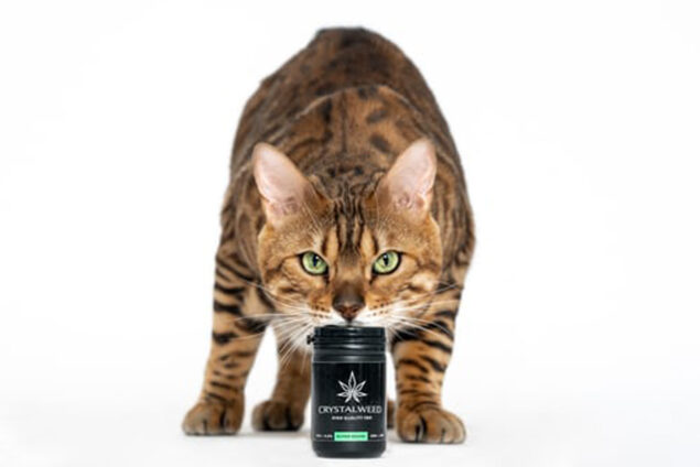 Can Your Pet Overdose from CBD?